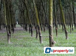 Picture of Agricultural Land for sale in Pendang