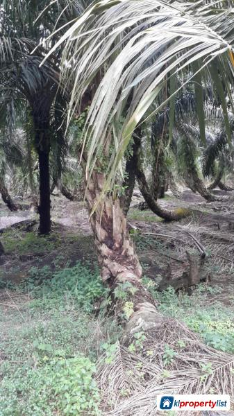 Picture of Residential Land for sale in Kuala Selangor