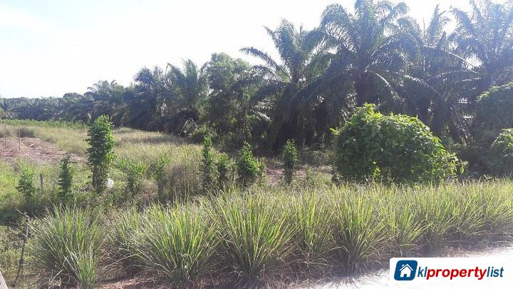 Picture of Agricultural Land for sale in Kuala Selangor