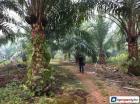Agricultural Land for sale in Johor Bahru