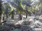 Agricultural Land for sale in Cheras