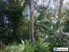Agricultural Land for sale in Bangi