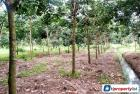 Agricultural Land for sale in Tanah Merah
